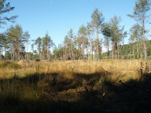 Blick auf das Deininger Moor