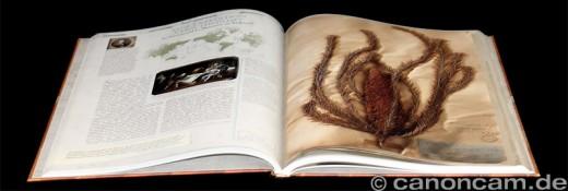 Das Herbarium der Entdecker: Humboldt, Darwin & Co. - botanische Forscher und ihre Reisen, Haupt-Verlag