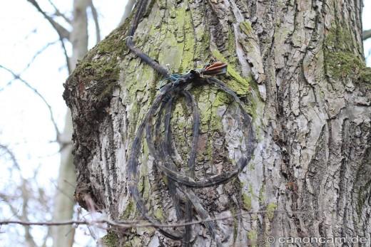 Kabel der Nisthöhlen-Kamera bei den Seestadl-Käuzen im Englischen Garten