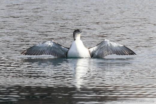Zeig mir Deine Flügel, Baby - Flügelspannweite von 122 bis 148 cm