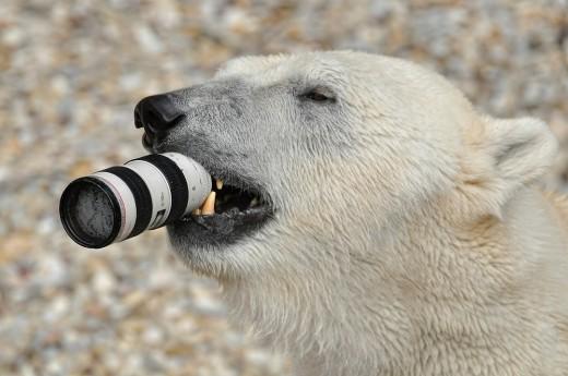 Qualitätsprodukt! Das Canon 70-200 2.8 II - (c) bei Marion und Dieter http://dieterundmarion-online.de