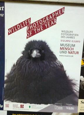 Wildlife Fotografien 2012 - vom 5. Dezember 2012 bis 3. März 2013 im Museum Mensch und Natur im Schloß Nymphenburg