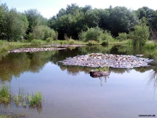 Einer der Teiche nördlich der Angerlohe