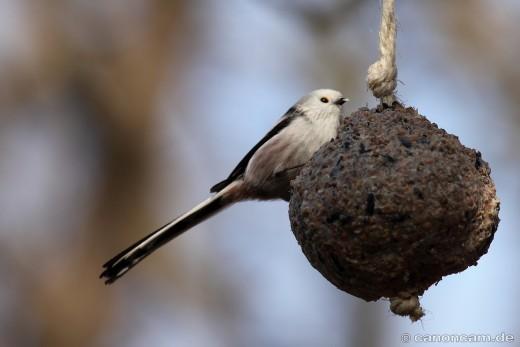 Eine Stunde lang Vögel zählen - Stunde der Wintervögel 2014