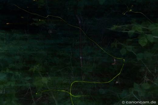 Leuchtkäfer Langzeitbelichtung