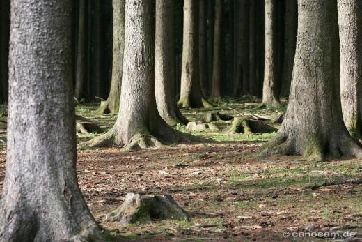 Spaziergänge im Wald sind gesund