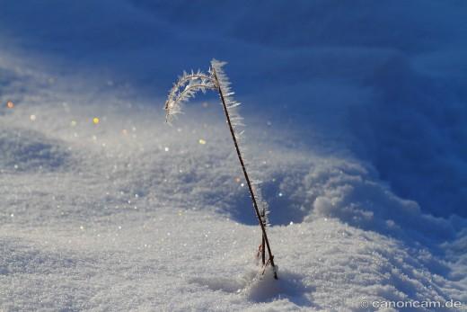 Winterstimmung im Nymphenburger Schlosspark