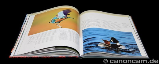 Literatur: Vögel richtig fotografieren von Bill Coster - Innenansicht