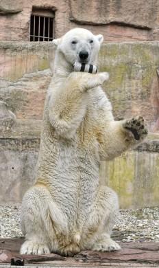 Felix der Eisbär hat eine Menge Spaß! (c) bei Marion und Dieter http://dieterundmarion-online.de