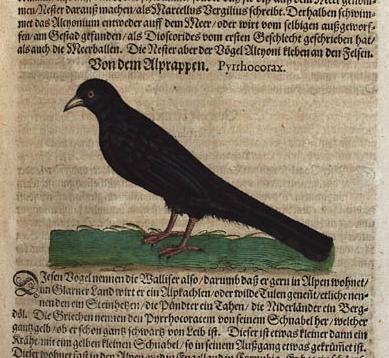 Conrad Gesner - Ornithologie aus dem 16. Jahrhundert