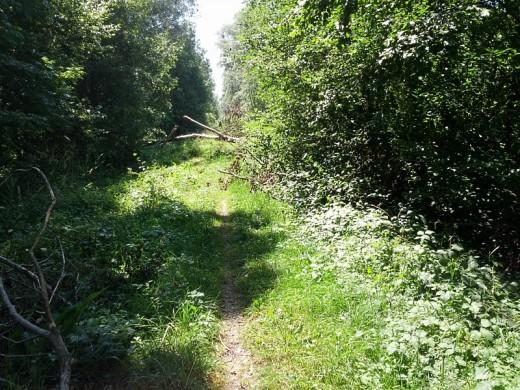 Baumstämme versperren den Ammer-Damm-Weg zum Grossen Binnensee