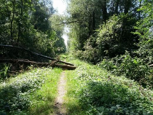 Noch mehr Baumstämme versperren den Ammer-Damm-Weg zum Grossen Binnensee