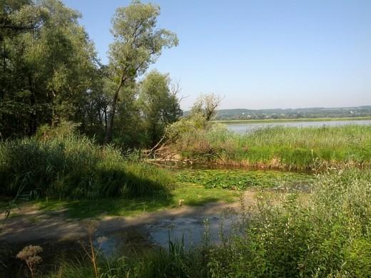 Schlickflächen, Seerosenfelder, Biber - Idylle pur am Binnensee, Ammersee