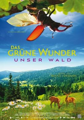 Film von Jan Haft - Das grüne Wunder - Unser Wald
