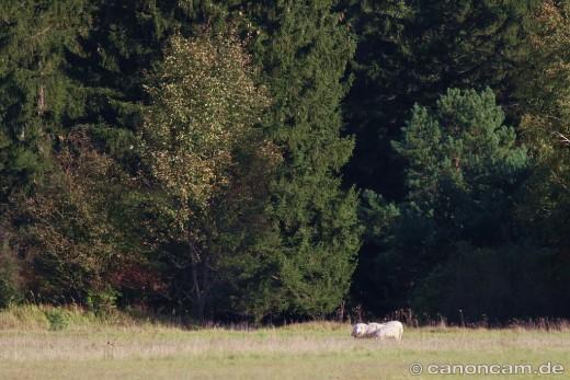 Mallertshofer Holz mit Heide