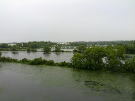 Blick auf das Ismaninger Teichgebiet - im Regen