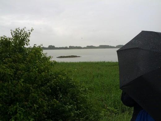 Lachmöwen-Kolonie am Ismaninger Speichersee im Regen