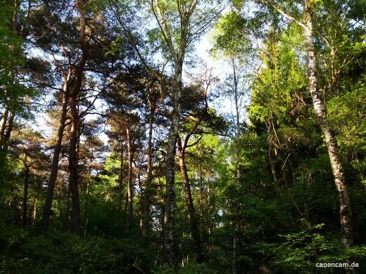 Schwarzhölzl - Natur-Idylle pur