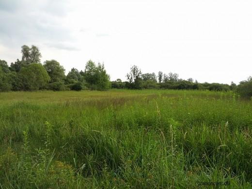 Niedermoor Naturschutzgebiet Viehlaßmoos - Erding